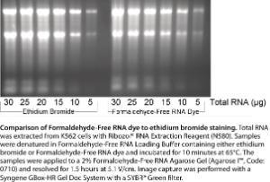 Rapid formaldehyde-free RNA gel kit